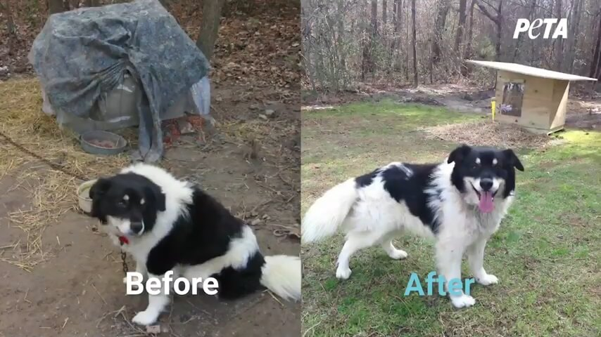 PETA Fieldworkers Help Dogs Survive During Frigid Winter