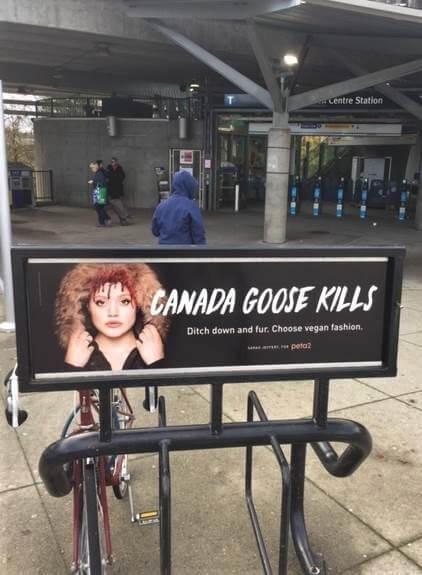 anti-canada goose ad in vancouver