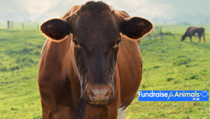Fundraise for Animals
