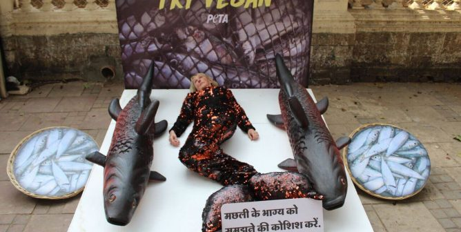 PETA Founder Takes Fish's Place in International Animal Rights Day Appeal
