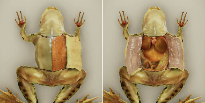 Froggipedia, a Virtual-Dissection App, Is Apple's Top iPad App of 2018