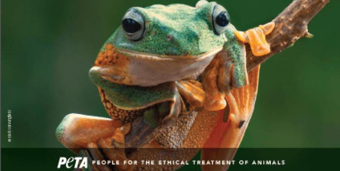 Apple's Top iPad App of 2018 Is Virtual-Dissection App Froggipedia
