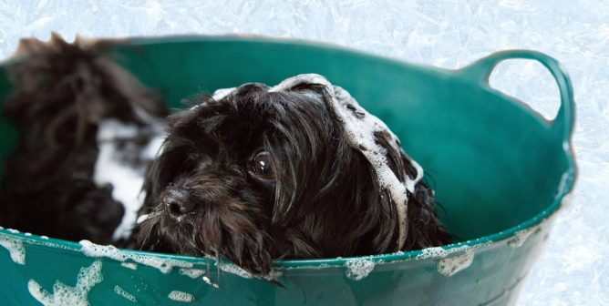 The Most Important Do's and Don'ts When Grooming Your Dog at Home