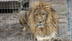Roadside Zoos and Other Captive-Animal Displays