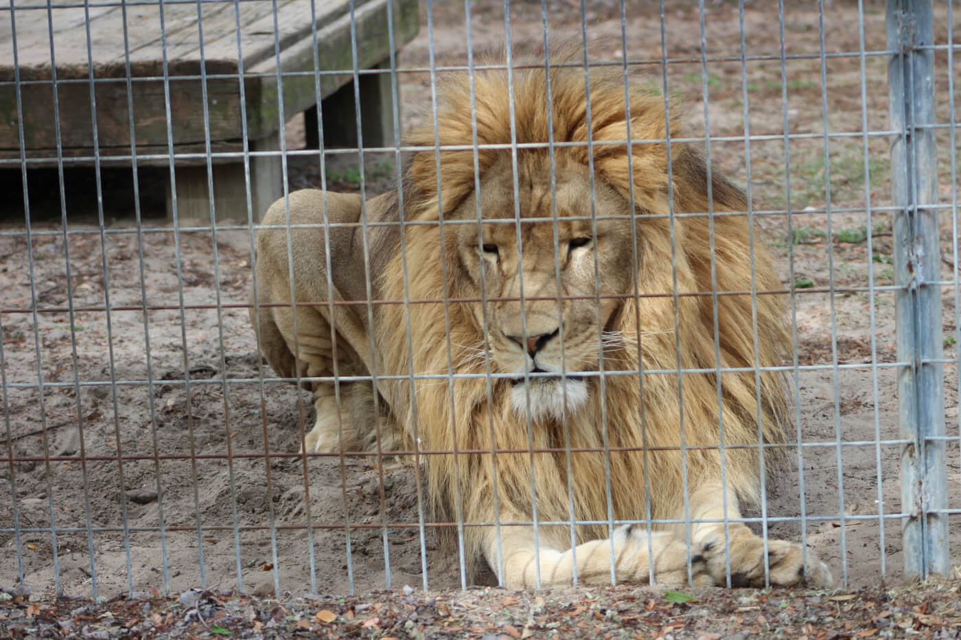 disadvantages of keeping animals in captivity
