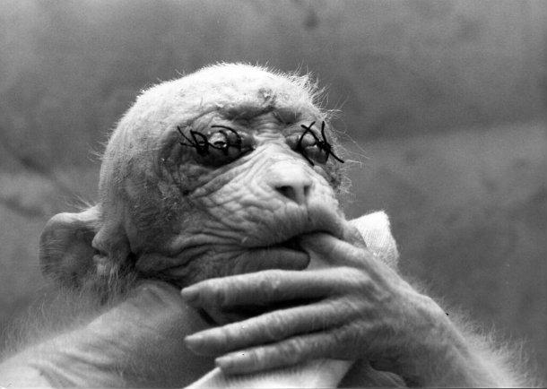 monkey, eyes, Britches