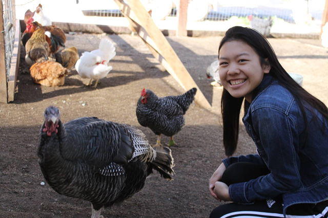 chicken, teen, students united animal rights