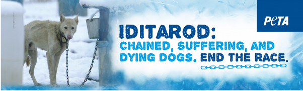 Iditarod Bus Ad Dying Dogs End The Race