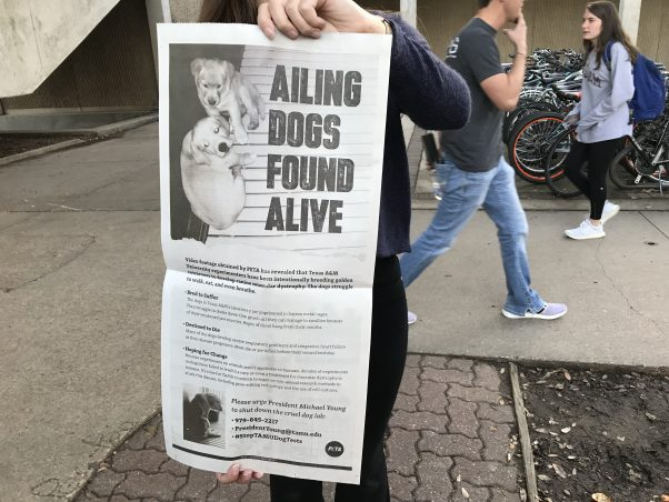 """""""Ailing Dogs Found Alive"""" ad in TAMU student newspaper"""