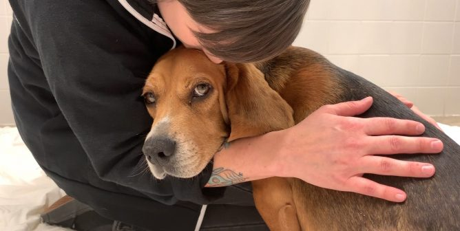 Virginia Bill Would Save Dogs, Cats From Experiments Here and Overseas