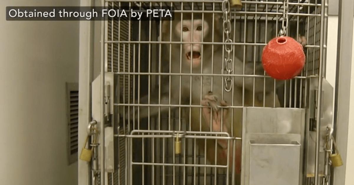 Washington National Primate Research Center at the University of Washington
