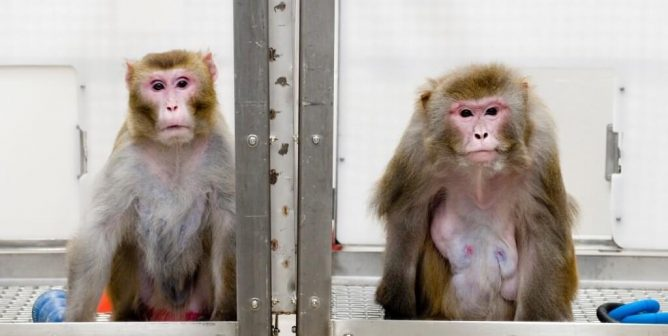 UW-Madison Experimenters Freeze Babies Alive, Leave Animals to Starve