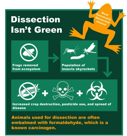 dissection alternatives, dissection