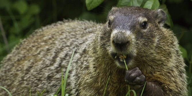 This Groundhog Day, Say No to Cruel Holiday Displays