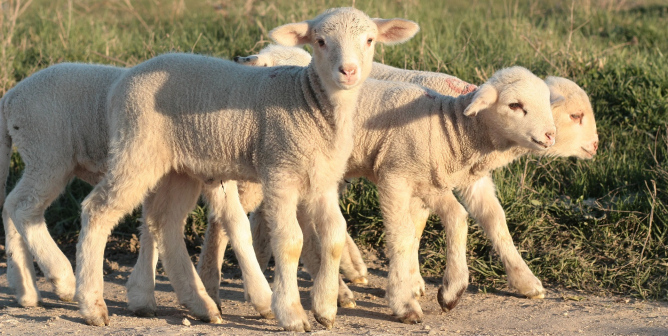 Talk About a Change of Heart: Four Farmers Say No to Animal Exploitation