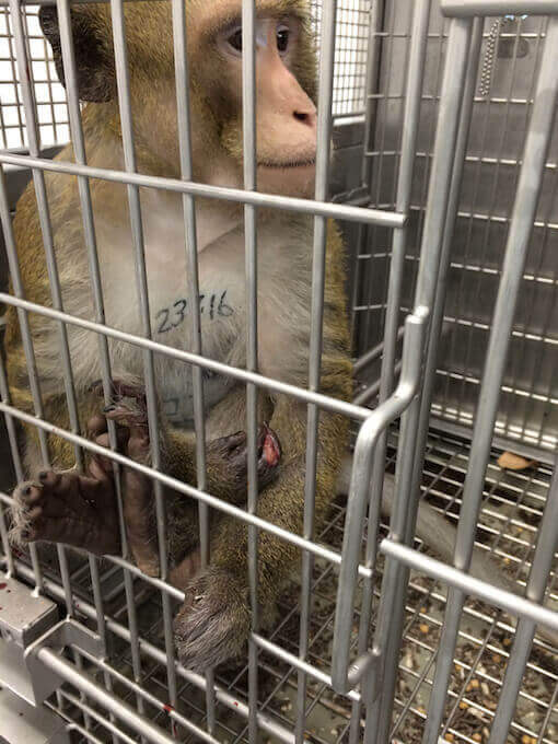 animal experiments at universities