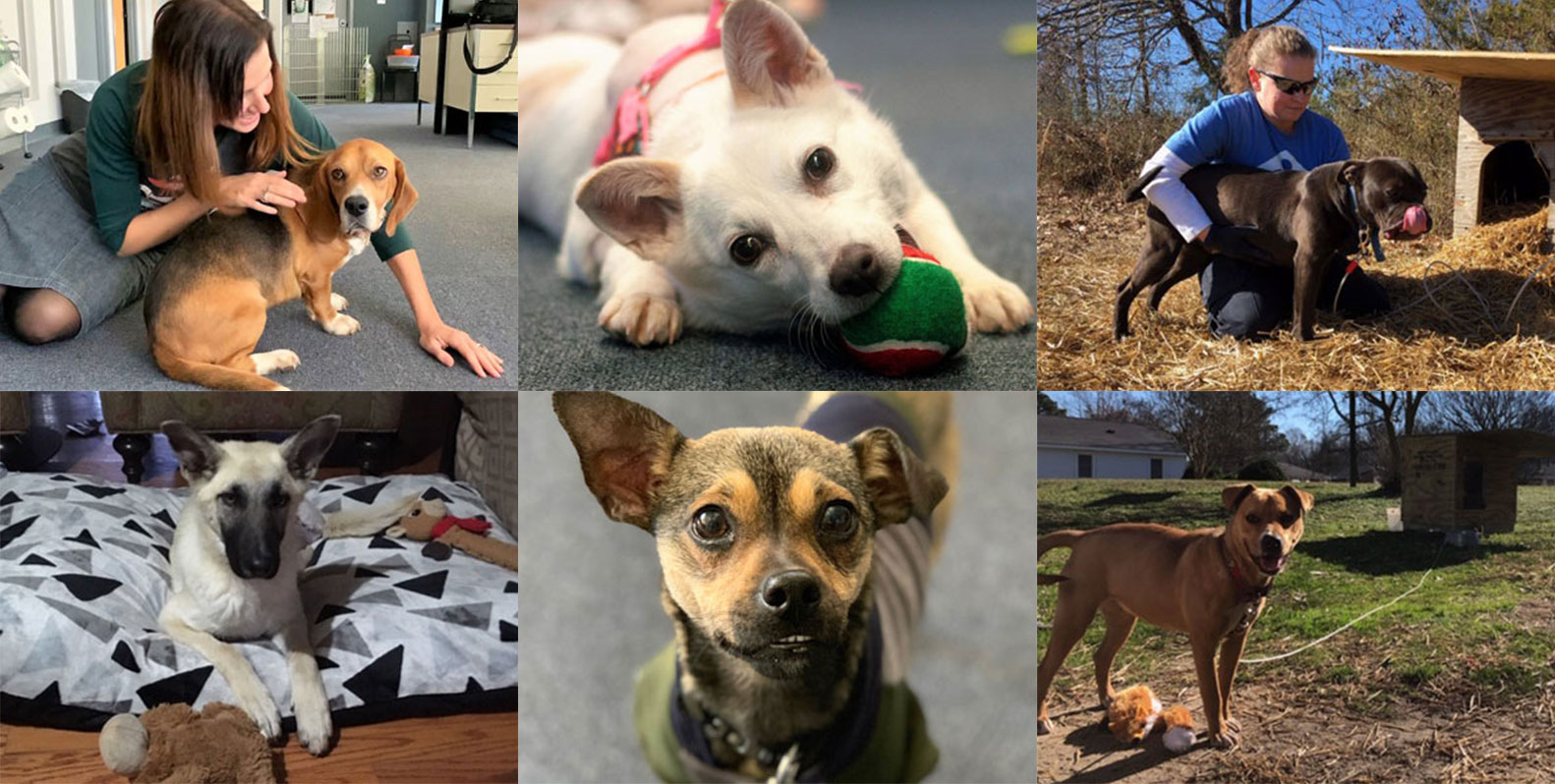 Community Animal Project to the Rescue (January 2019) | PETA