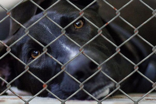 sad pup cage