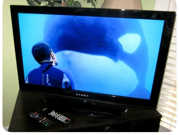 Blackfish CNN airing