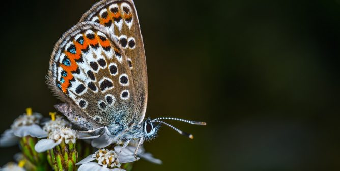 Ditch Cruel Butterfly Kits for Humane Life-Cycle Lessons