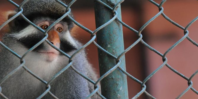 Roadside Zoos Are Animal Prisons!