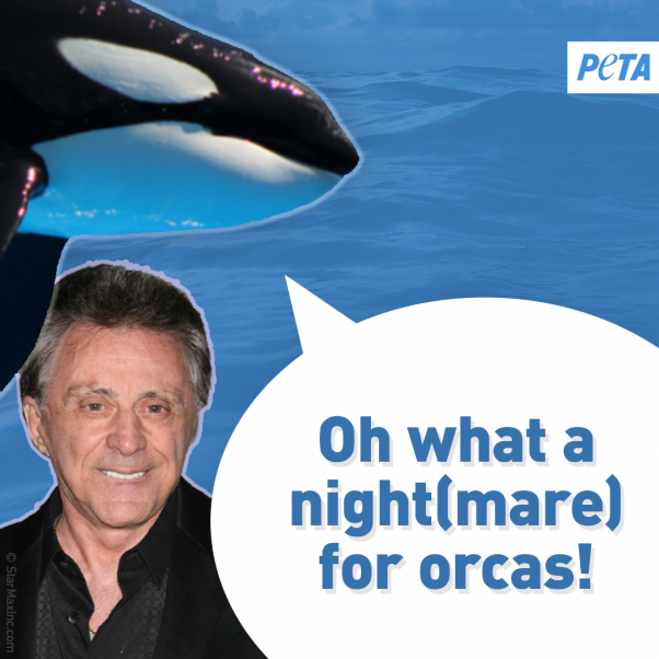 peta orca image urging celebrities to save the whales and other animals at seaworld