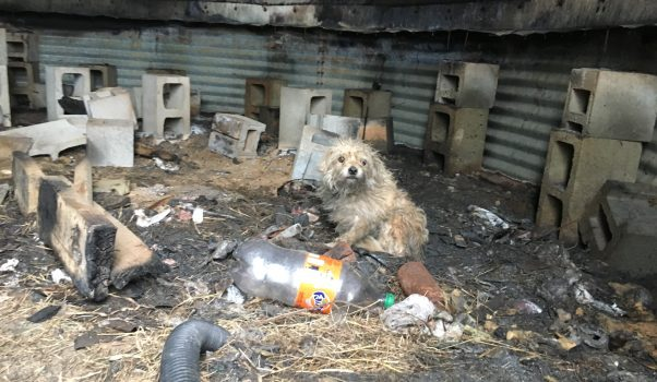 Small terrier mix in silo surrounded by trash