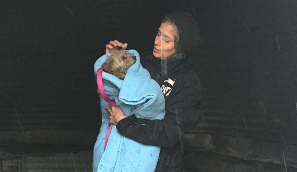 PETA staffer with rescued dog Charley wrapped in a blanket