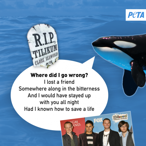 peta orca image urging bands to save the whales and other animals at seaworld