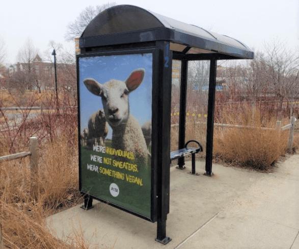 Wear Something Vegan Ad in Stamford Connecticut