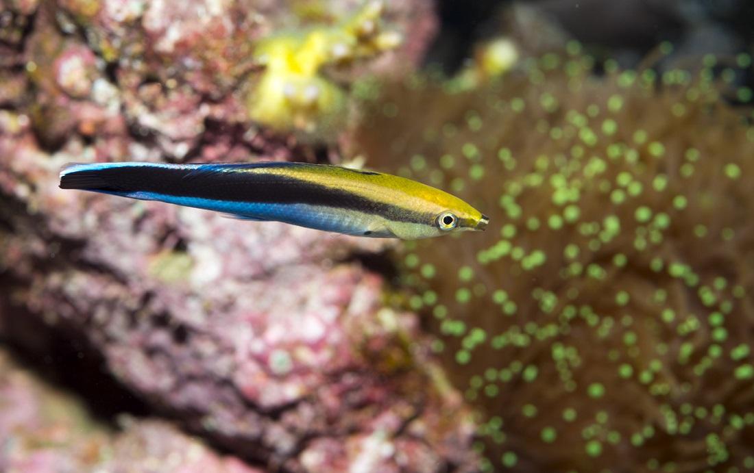are fish self-aware