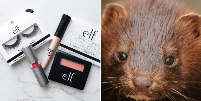Why e.l.f. Cosmetics Brushes and Eyelashes Are PETA-Certified Cruelty-Free