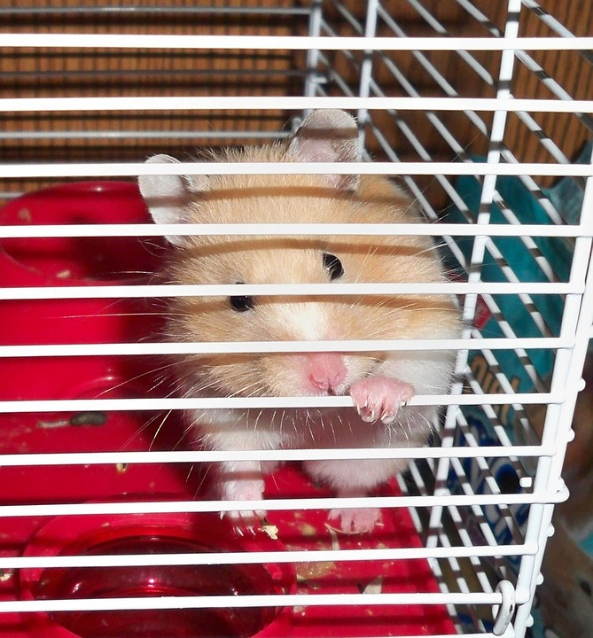 Hamster in a cage