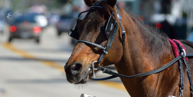 Victory! Horses Spared Chicago Traffic, Forced Labor With Carriage Ban