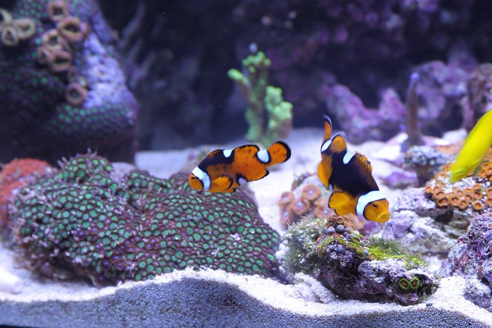 A well decorated fish tank that looks like an OK place for fish to live