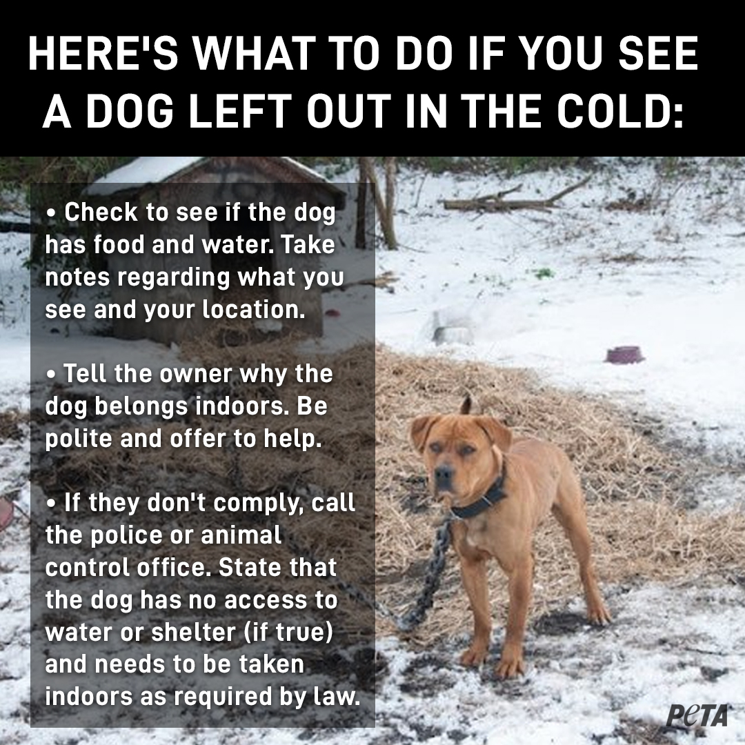 Animal Companions Are Freezing to Death in Cold Temps | PETA