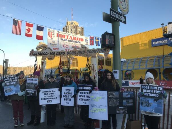 peta protesters at the start of the 2019 iditarod
