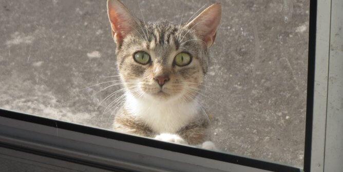 9172b2d065f5 Horrific 'Outside Cat' Stories (Updated June 2019) | PETA