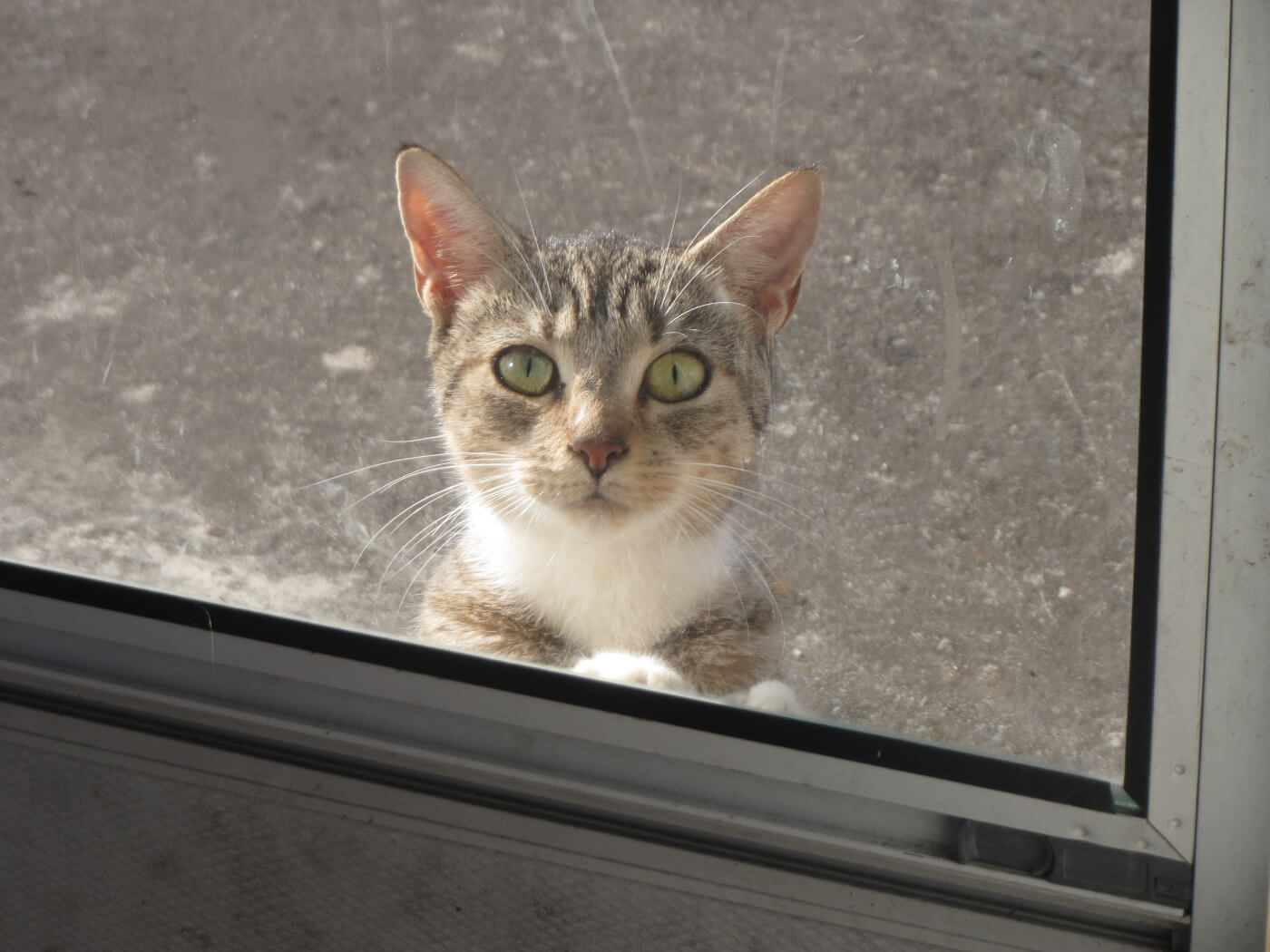 stray cat outside