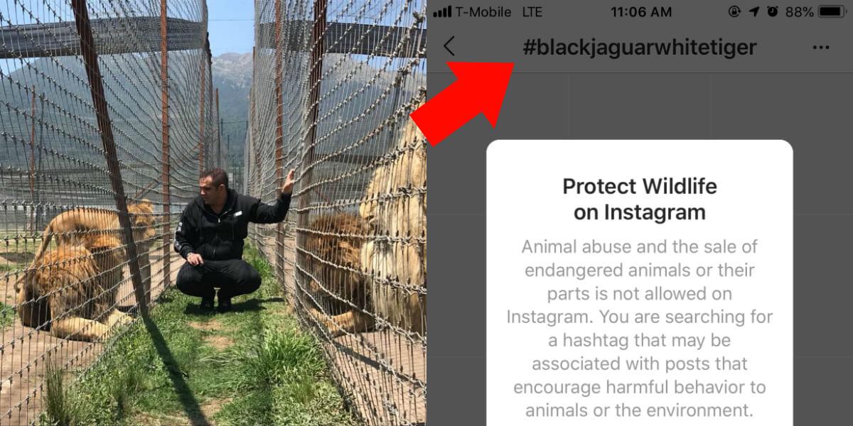 Why No One Should Ever Go to Black Jaguar–White Tiger   PETA