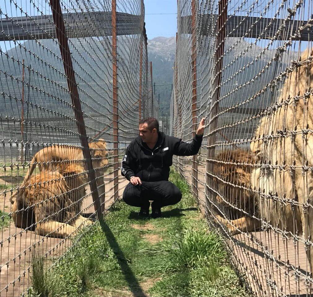 exposed: black jaguar–white tiger   peta