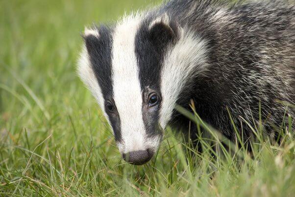 Loreal group bans Badger and all animal hair