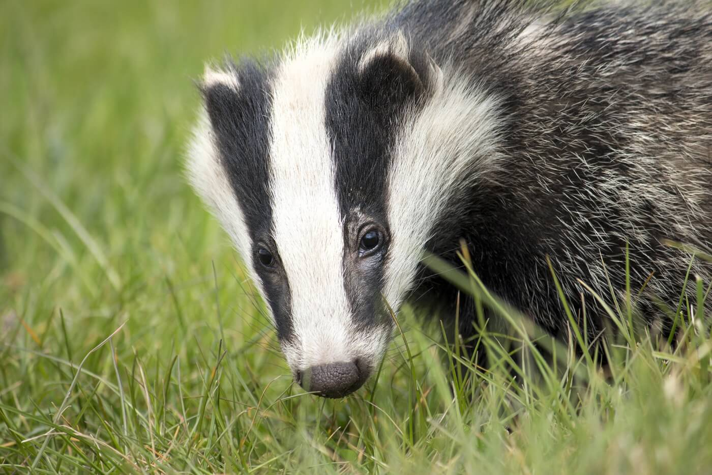 2020 Brands Ban Badger Hair