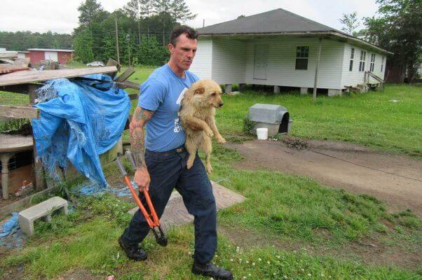 A CAP fieldworker helps a dog in need.