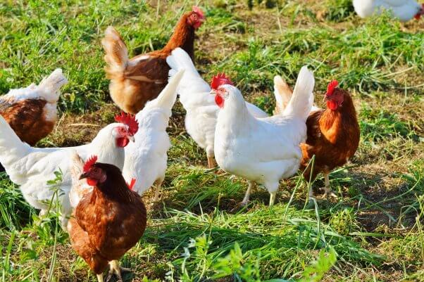 Well-intentioned consumers are being duped by pictures of hens in open green fields into taking home the very products of crowding and misery that they paid higher prices to avoid.