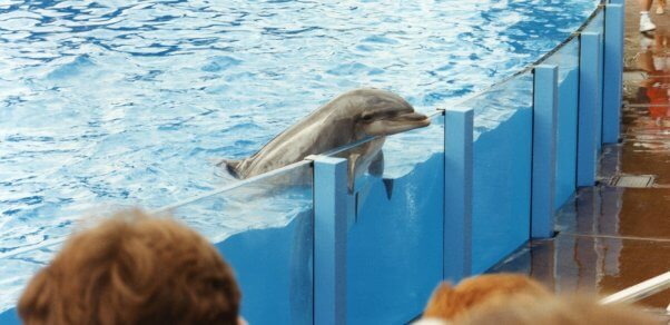 Sad-looking dolphin rests head on edge of enclosure