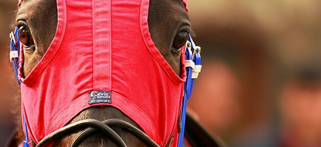 A horse's face wearing a red and blue mask. This horse is used for racing.