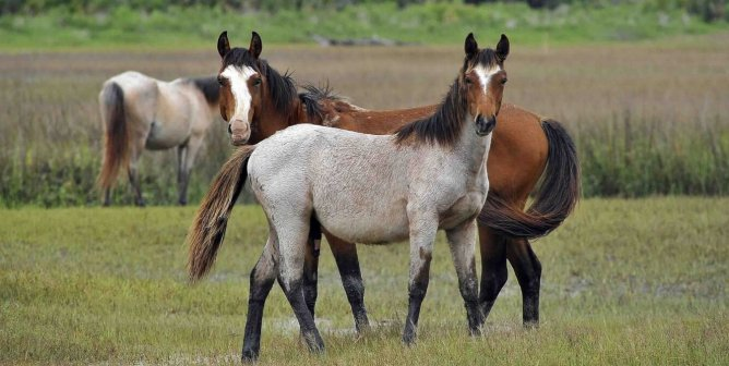 PETA Rapid-Action: Discover Quick Ways to Help Horses Today