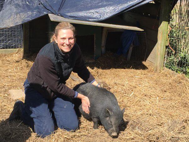 Black pot-bellied pig