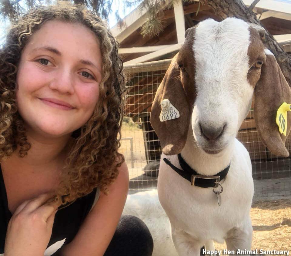 Goat, Zoe, ffa, rescue